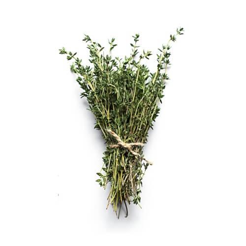 Thym (Thymus Officinalis)