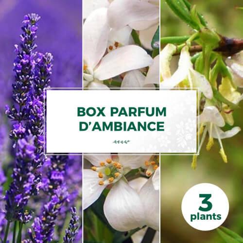 Box Parfum d'Ambiance