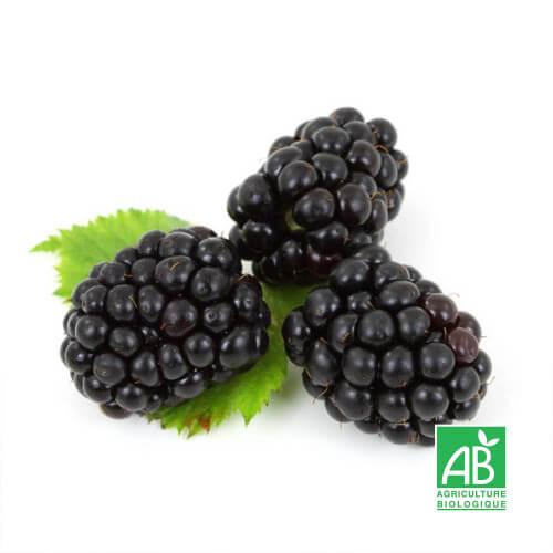 """Mûrier sans épines (Rubus """"Thornfree"""")"""