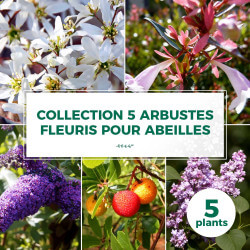 Collection 5 Arbustes Fleuris