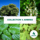 Collection 4 Arbres