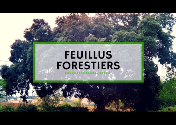 Feuillus Forestiers